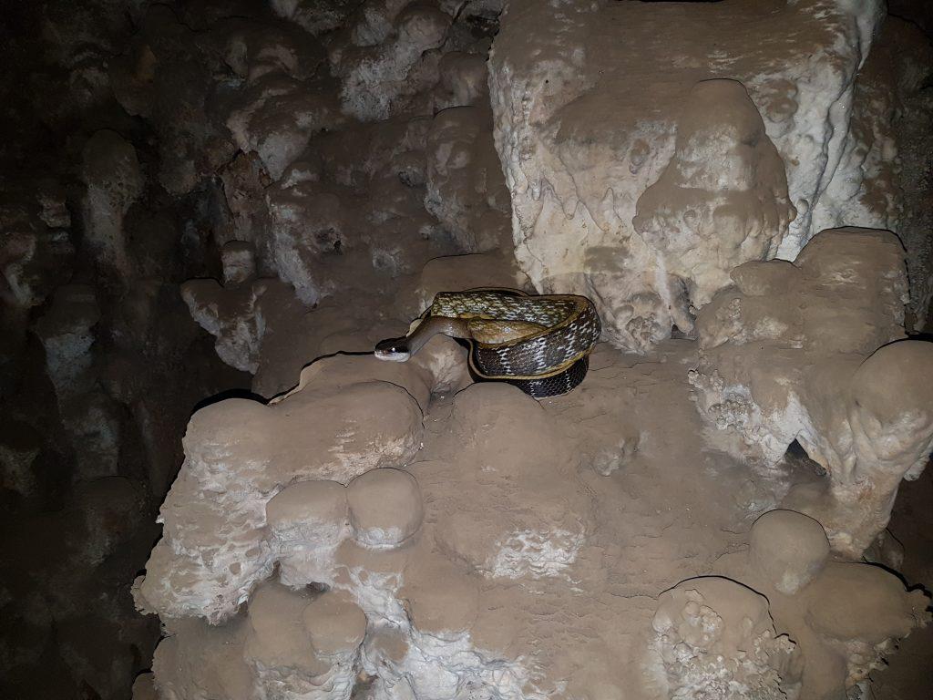 Gyvatės Tailande