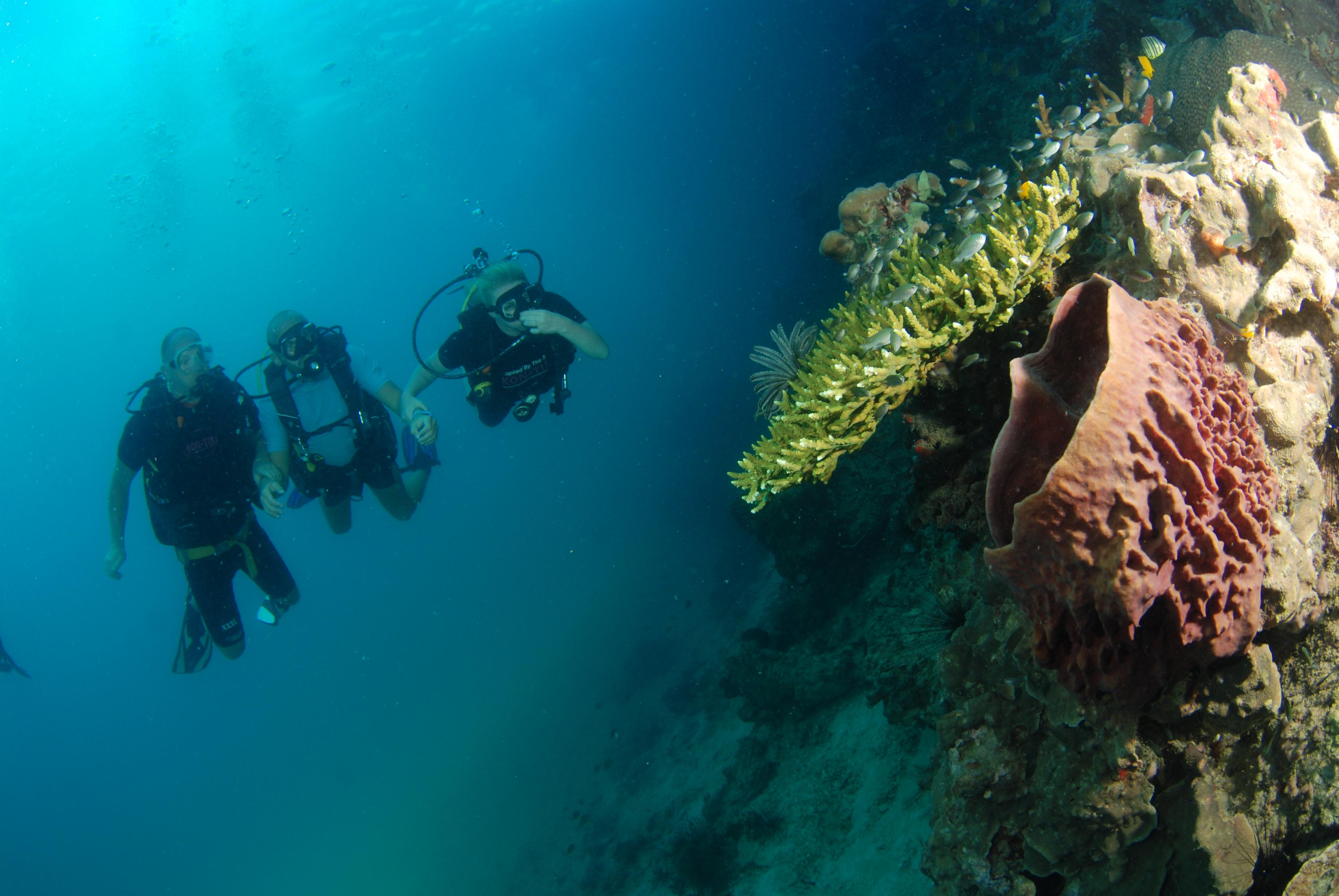 Scuba diver - pirmasis žingsnis tikro nardytojo link