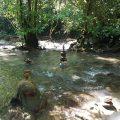 džiunglės, ramybė