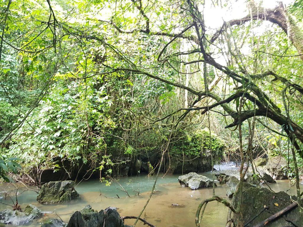 Tailando džiunglės