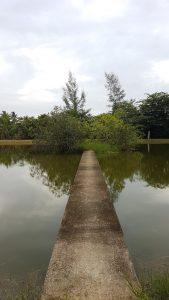 Medituojama buvo ir gamtoje