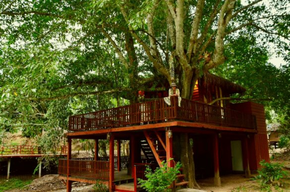dreamcaught tree houses