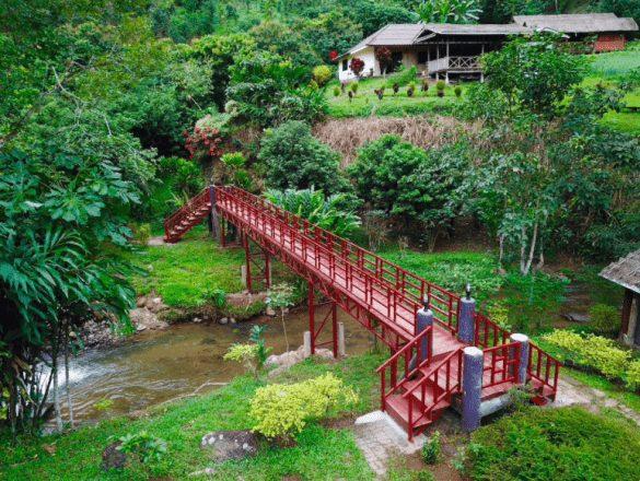 dreamcaught namelis medyje tailande