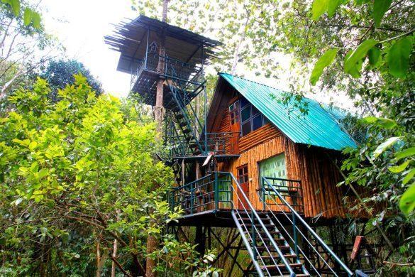 khaosok treehouse