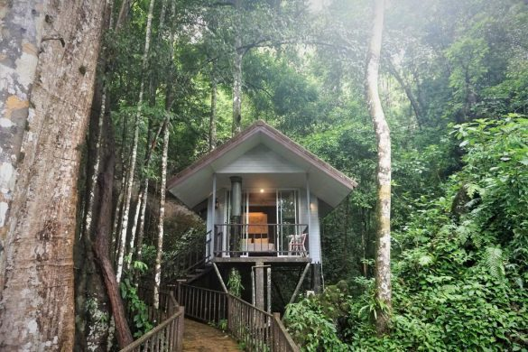 rock tree house