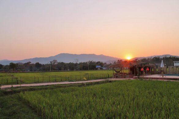 ryžių laukai viešbučio teritorijoje country retreat