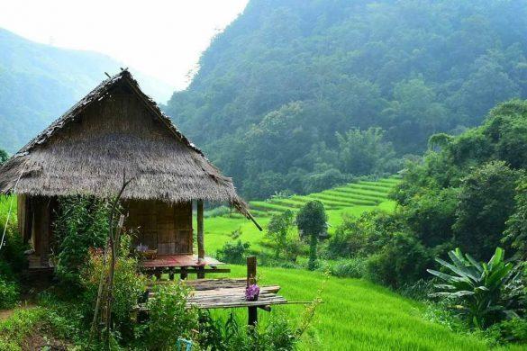 kowit maechaem farmhouse ryžių laukuose