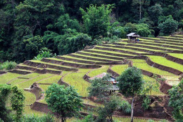 ryžių laukuose kowit maechaem farmhouse