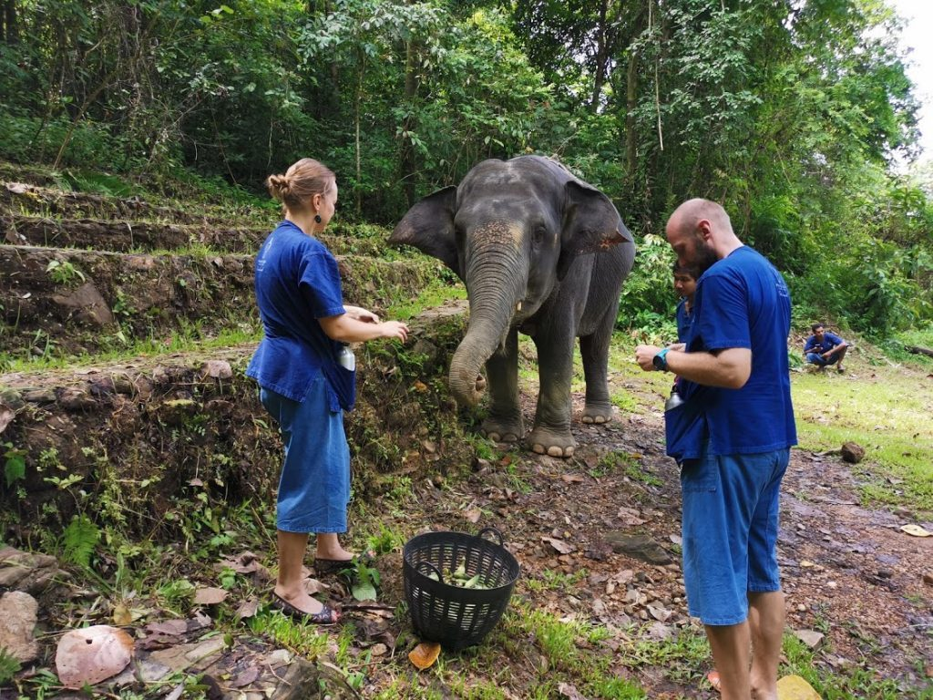 drambliai tailande