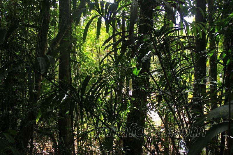 krabi džiunglės